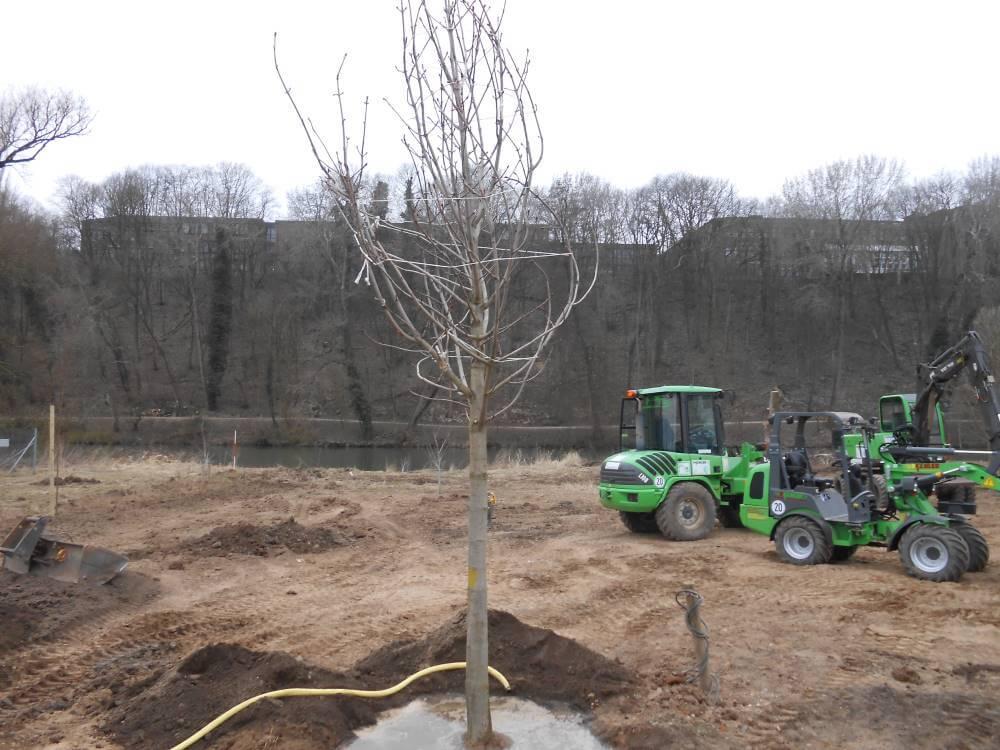 Die Großbaumpflanzung