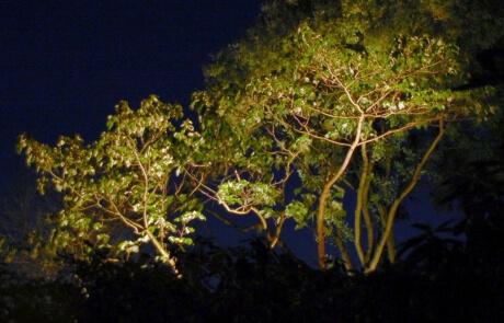 Bäume beleuchten