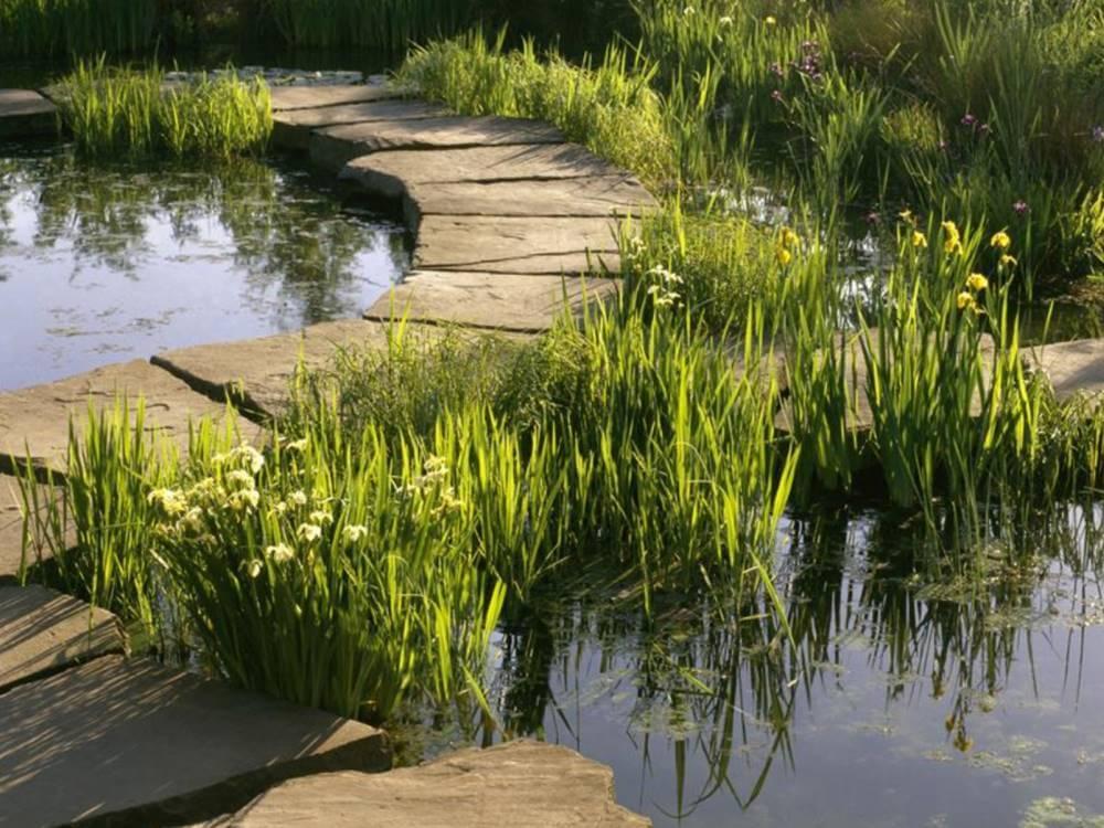 Gartenteich galabau m hler naturteich for Naturteich garten