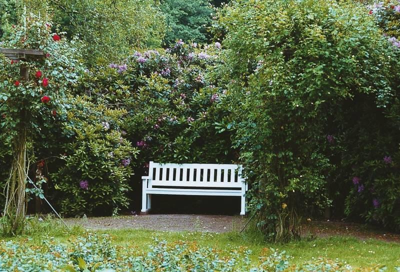 schattengarten galabau m hler garten im schatten. Black Bedroom Furniture Sets. Home Design Ideas