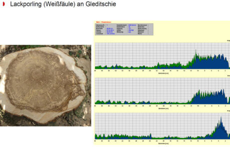 Resistograph Baumkontrolle